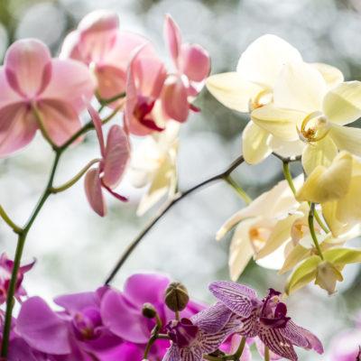 Orquídeas-2016-155